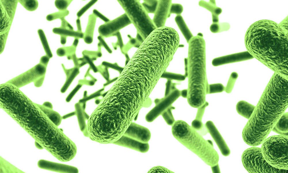 improve microbiome probiotics